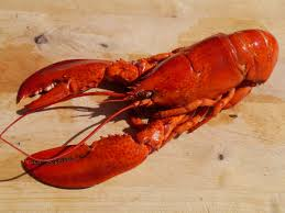 lobster is luxury and expensive